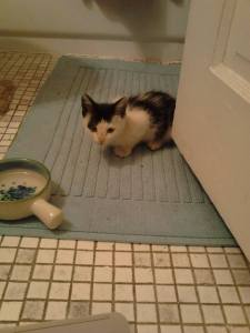 black-and-white kitten, hunched down on a bathroom floor looking wary.