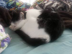 Black and white cat curled up and sleeping on a bed.